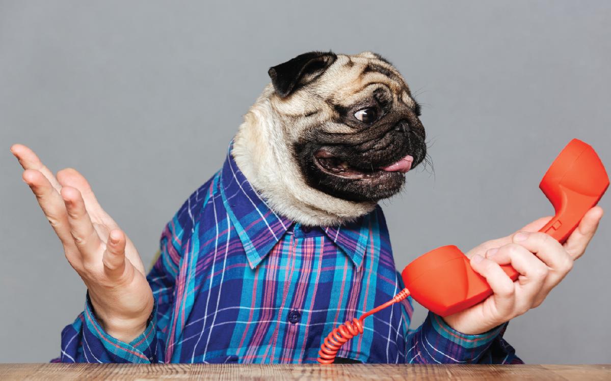 Pet Answering Service